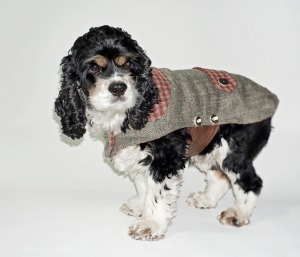woolen tweed Dog coat